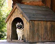 Návod na výrobu búdy pre psa – rozmery, cena, farba, zateplenie