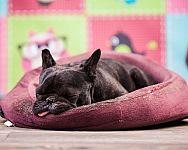 Ako vybrať pelech pre psa? Obľúbené sú plastové i chlpaté pelechy so strieškou