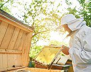 Chov včiel a legislatíva: Aké sú povinnosti včelára?