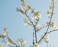 7 jarných tipov, ako správne prerezávať ovocné stromčeky a kríky