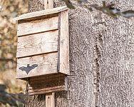 Búdka/prístrešok pre netopiere – návod