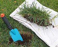 Obnova trávnika na jar: Hnojenie, vertikulácia, výsev, choroby trávnika