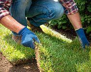 Trávnikový koberec – zakorenenie, starostlivosť, cena