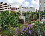 Oplatí sa záhradkárčenie v meste? Ako a kedy začať, čo sadiť