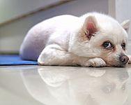 Chladiaca podložka pre psa – ako funguje, kedy nad ňou uvažovať