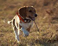 Ako vybrať GPS lokátor (obojok, tracker) pre mačku alebo psa