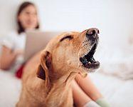 Ako odnaučiť psa štekať v noci, keď je sám doma, na ľudí a iných psov. Sú obojky proti štekaniu účinné?