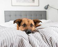 Nechať či nenechať spať psa vo svojej posteli? Prezradíme vám plusy aj mínusy