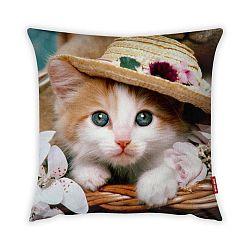 Obliečka na vankúš Vitaus Cute Kitten, 43×43 cm