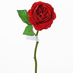 Florasystém Ruža anglická červená 1100252