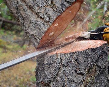 Výruby stromov na vlastnom pozemku pred domom – povolenie, dôvody