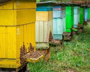 Kam umiestniť úľ? Umiestňovanie úľov má svoje pravidlá