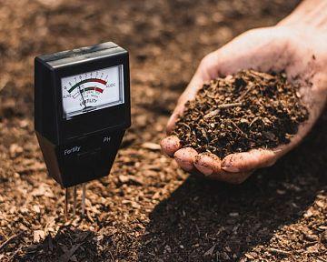 Ako vylepšiť pôdu: pH pôdy pre paradajky, čučoriedky, trávnik – stupnica